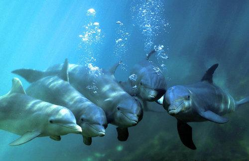 image_2181e-Bottlenose-dolphins.thumb.jpg.dd03680b56050299647dba8ec64b226a.jpg