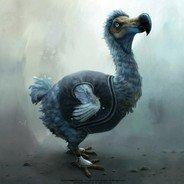 dodo2005