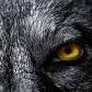 Wasze Kupony - ostatni post przez Wolf Among Us